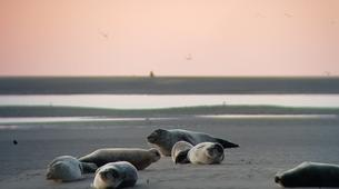 Hiking / Trekking-Baie de Somme-Guided hiking and seal discovery in the Baie de Somme-4