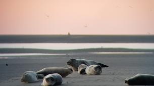 Randonnée / Trekking-Baie de Somme-Randonnée guidée et découverte des phoques en Baie de Somme-4