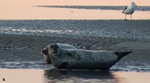 Randonnée / Trekking-Baie de Somme-Randonnée guidée et découverte des phoques en Baie de Somme-5