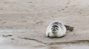 Hiking / Trekking-Baie de Somme-Guided hiking and seal discovery in the Baie de Somme-1