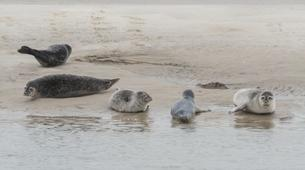 Hiking / Trekking-Baie de Somme-Guided hiking and seal discovery in the Baie de Somme-2