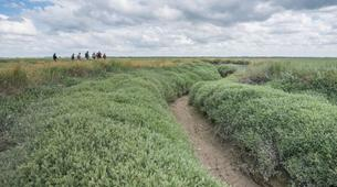 Hiking / Trekking-Baie de Somme-Guided hiking, bird and seal discovery in the Baie de Somme-2