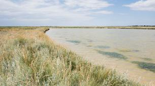 Hiking / Trekking-Baie de Somme-Guided Hiking in the Baie de Somme-3
