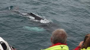 Wildlife Experiences-Reykjavik-Whale watching excursion from Reykjavik-6