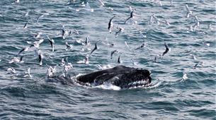 Wildlife Experiences-Reykjavik-Whale watching excursion from Reykjavik-5