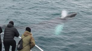 Wildlife Experiences-Reykjavik-Whale watching excursion from Reykjavik-3