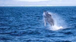 Wildlife Experiences-Reykjavik-Whale watching excursion from Reykjavik-1