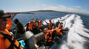 Wildlife Experiences-Plettenberg Bay-Seal viewing tour in the Robberg Nature Reserve-1