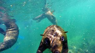 Wildlife Experiences-Plettenberg Bay-Seal viewing tour in the Robberg Nature Reserve-2