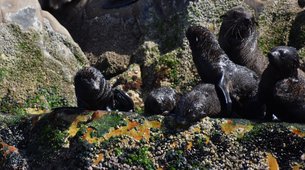 Wildlife Experiences-Plettenberg Bay-Seal viewing tour in the Robberg Nature Reserve-6
