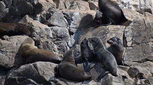 Wildlife Experiences-Plettenberg Bay-Seal viewing tour in the Robberg Nature Reserve-4