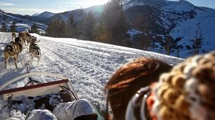 Chiens de traîneau-Andorre-Chiens de traîneau à Port d' Envalira, Andorra-2