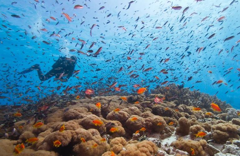 plongée sous marine zanzibar