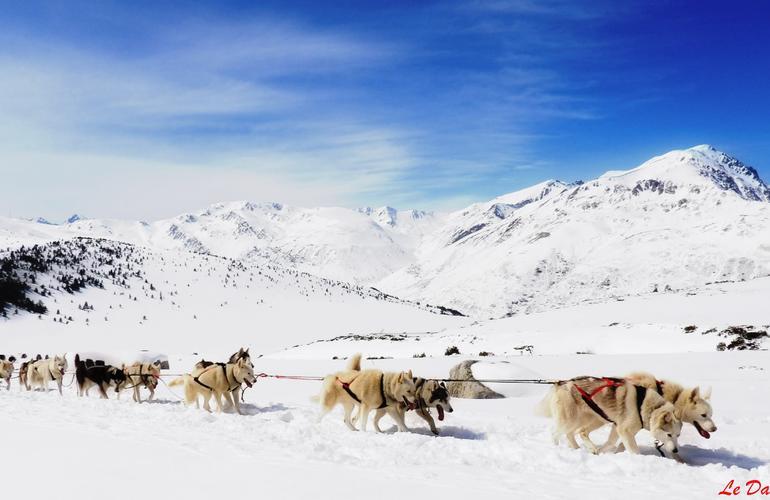chiens de traineau en Andorre
