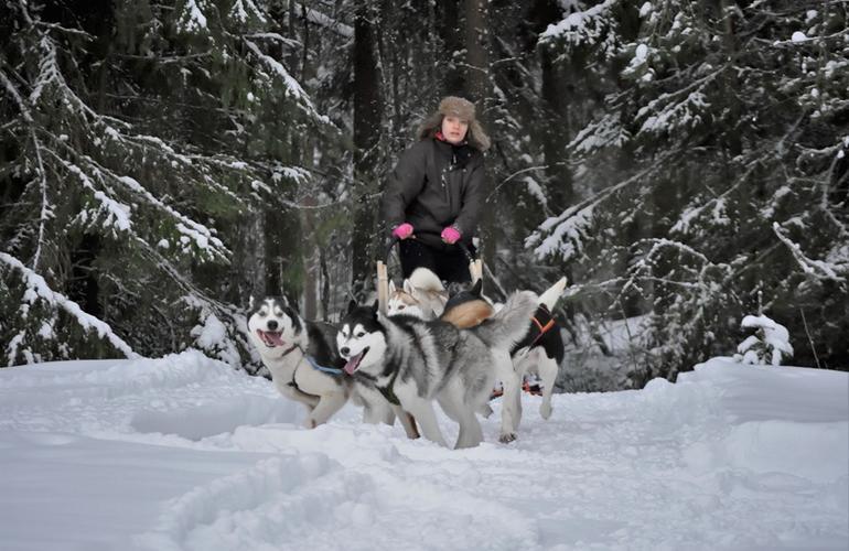chiens de traineau finlande