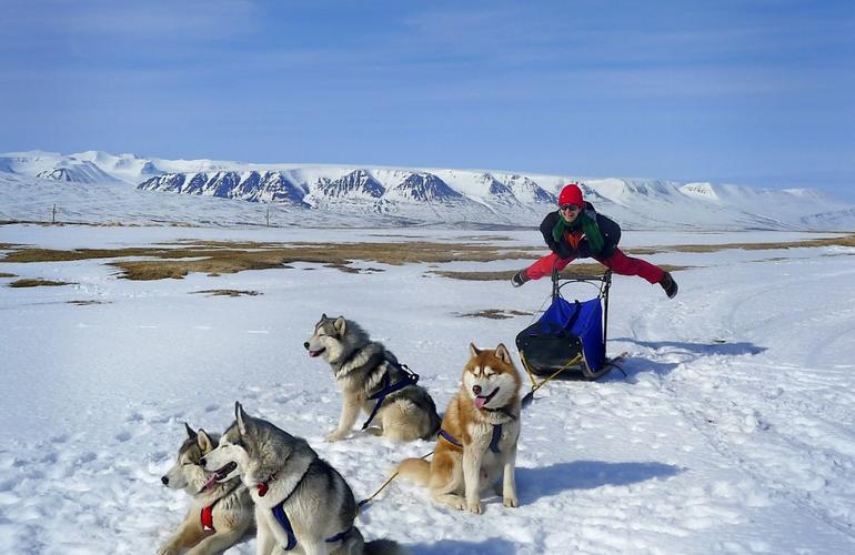 Islande chiens de traineau