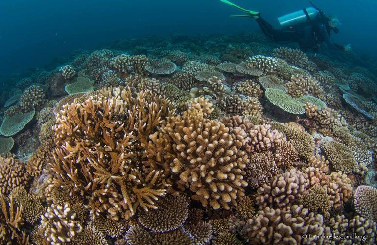 First Scuba Dive In Tahiti