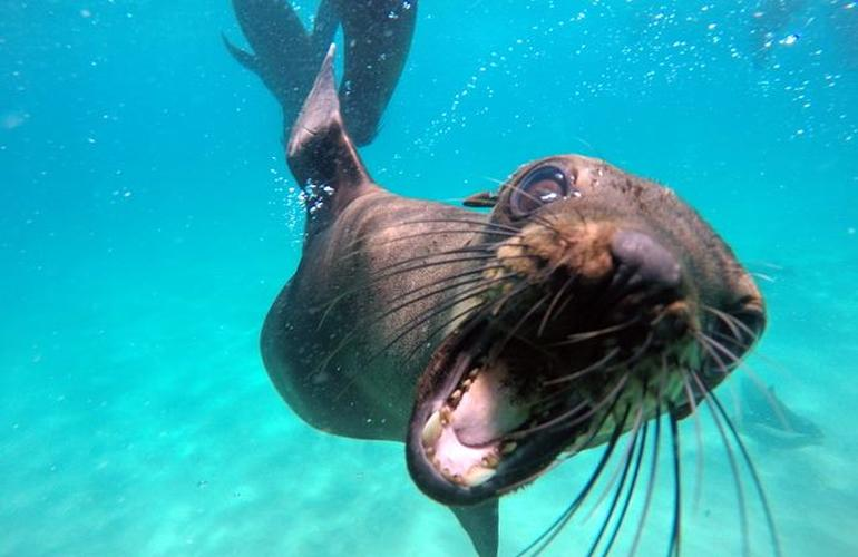 Swimming with seals in Robberg Nature Reserve on seal clip art, seal in the sea, seal animals, seal on land,