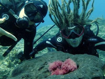Scuba diving PADI courses in Heraklion