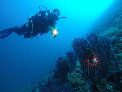 Adventure dives in Alonissos