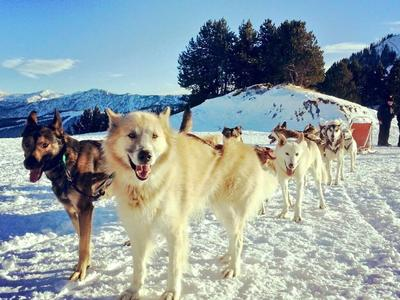 Mushing excursion in Port d' Envalira