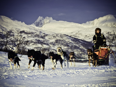 Arctic dog sledding expeditions in Tromsø