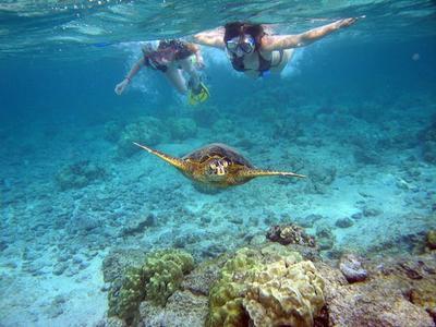 Snorkeling excursion in Zante (Zakynthos) Island