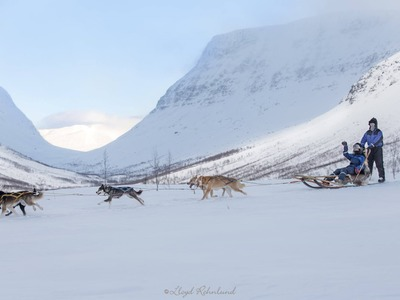 Full day Arctic dog sledding expeditions, Tromsø