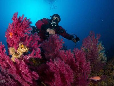 Guided Scuba Dives in Cyclops Islands Marine Protected Area near Catania
