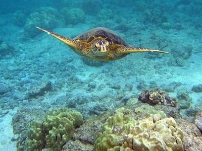 Snorkeling excursion in Zakynthos